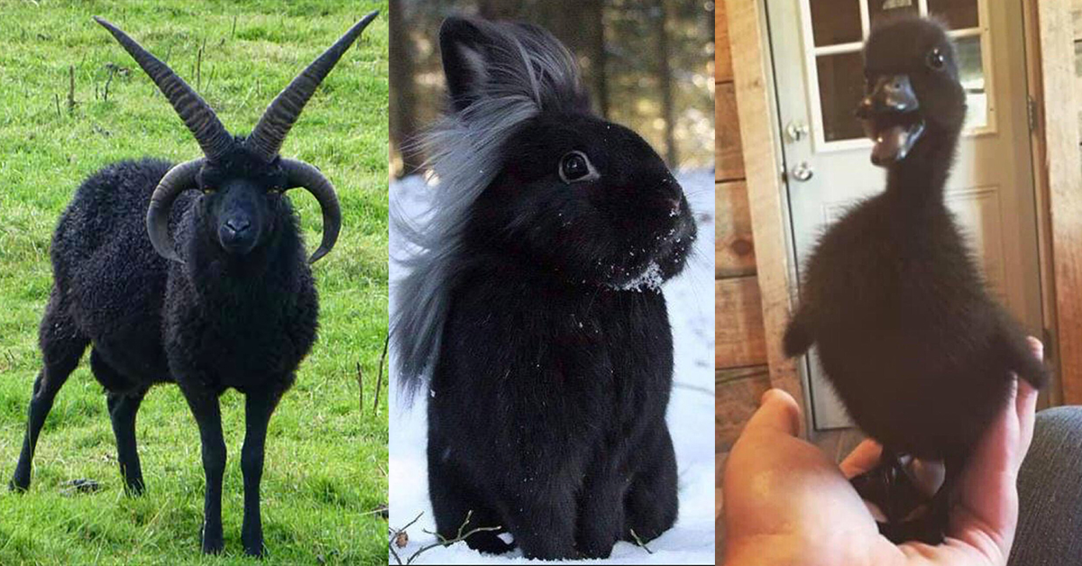 15 Animals More Goth Than I'll Ever Be